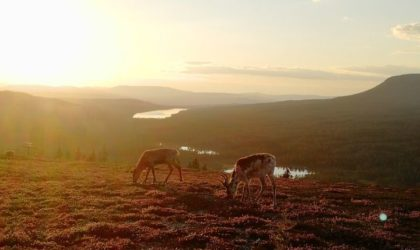 Att göra i Idre på sommaren – 14 tips för semestern i Idre