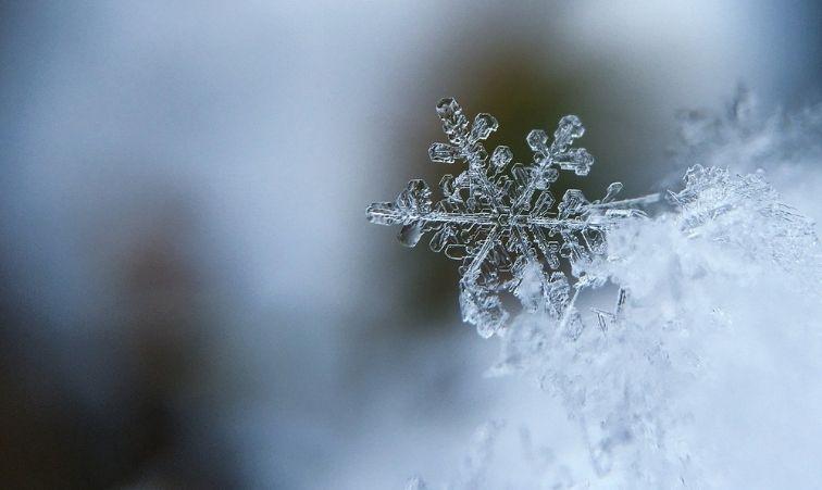 hålla sig varm