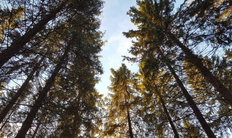 vandringsleder i stockholm träd