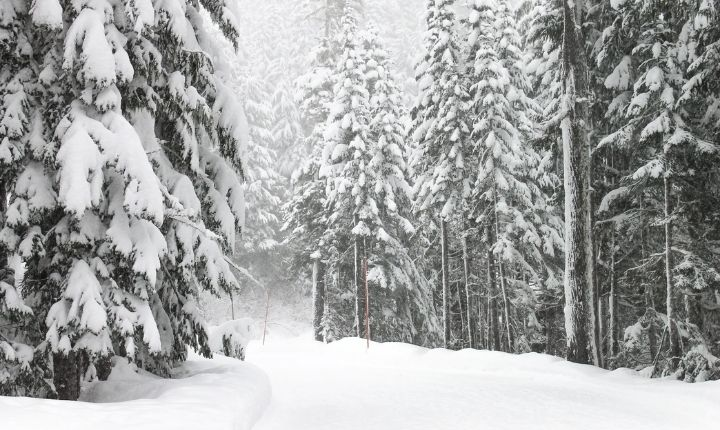 åka längdskidor i sundsvall